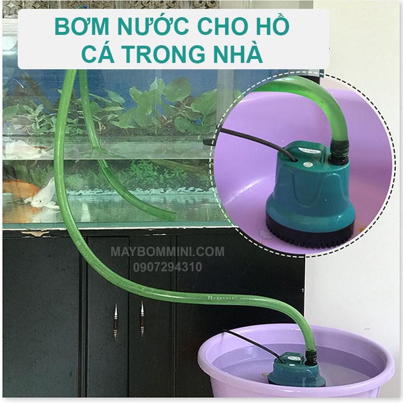 Bom Cap Nuoc Cho Ho Ca Trong Nha