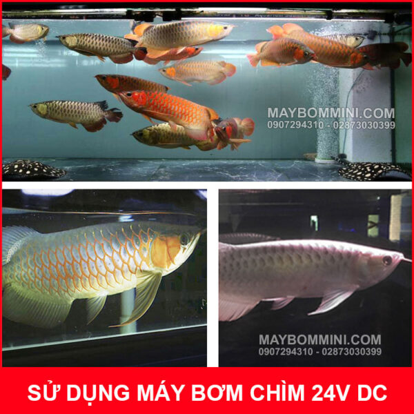 Su Dung May Bom Cho Ho Be Ca Coi